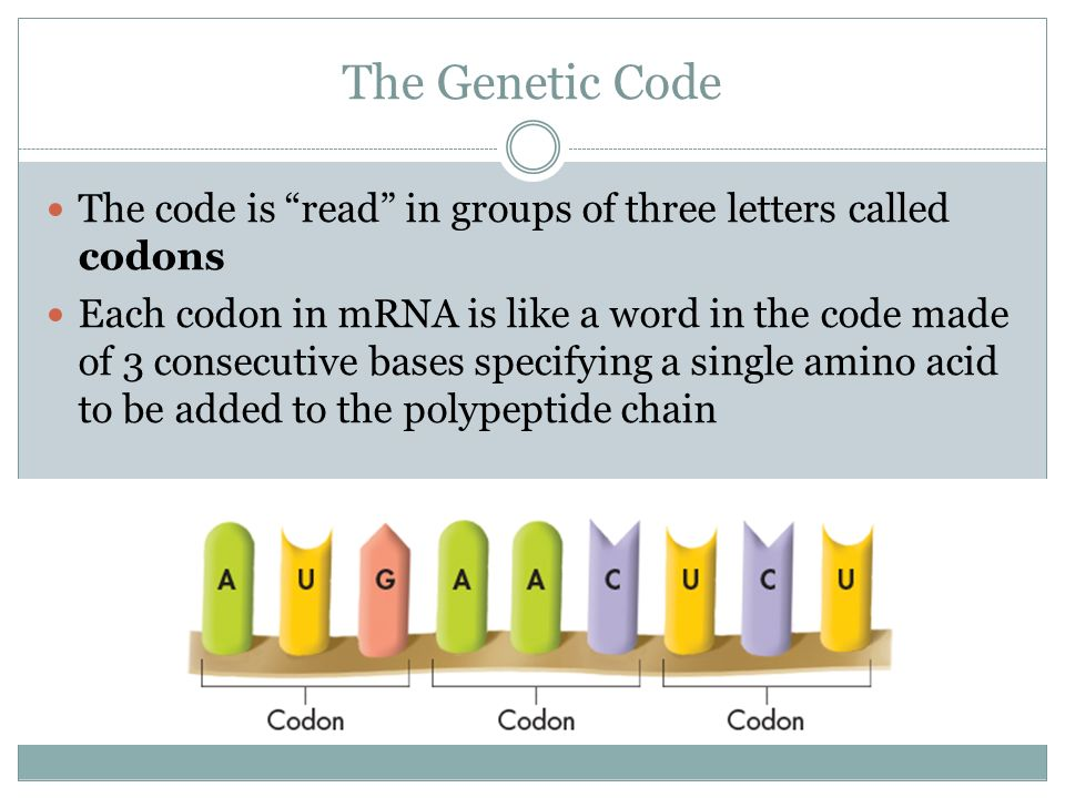The Genetic Code The code is read in groups of three letters called codons.