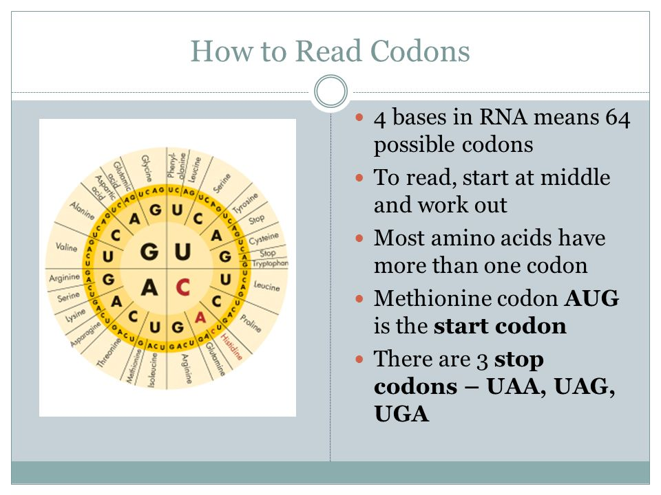How to Read Codons 4 bases in RNA means 64 possible codons