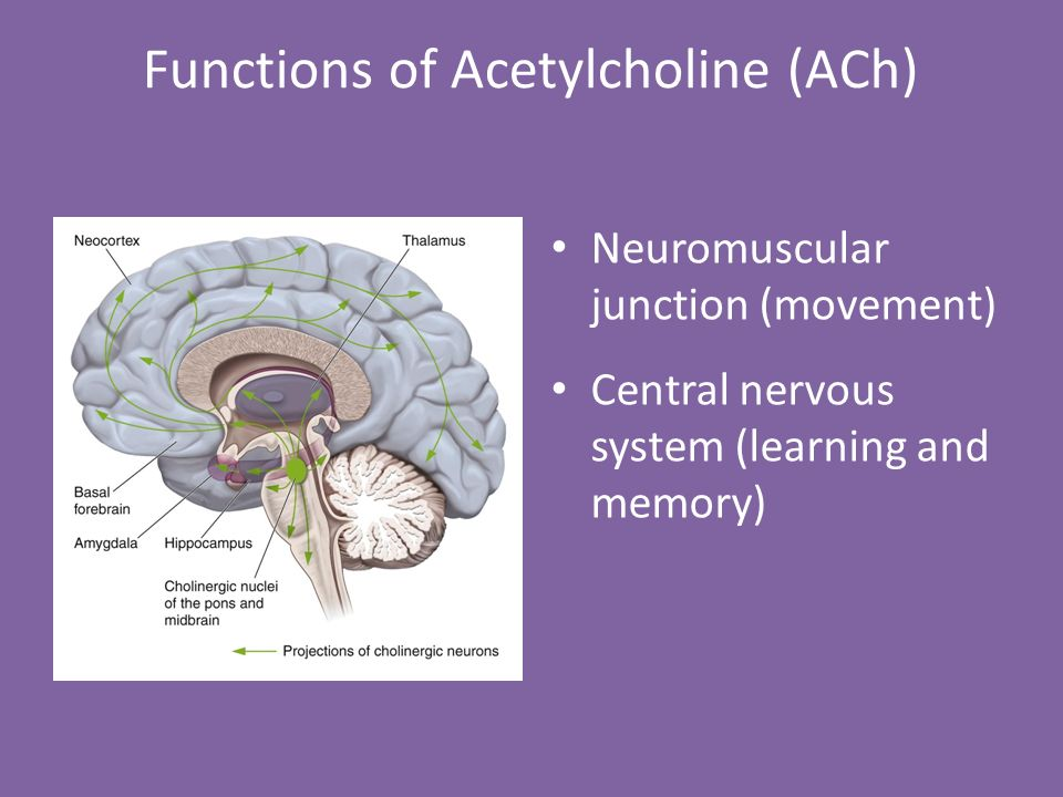 Neurotransmitters: Catecholamines & Acetylcholine Chapters ...