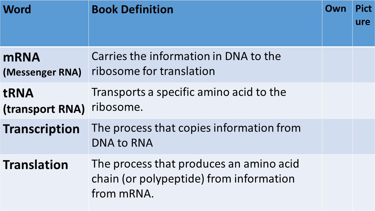 Protein Synthesis Biology Definition