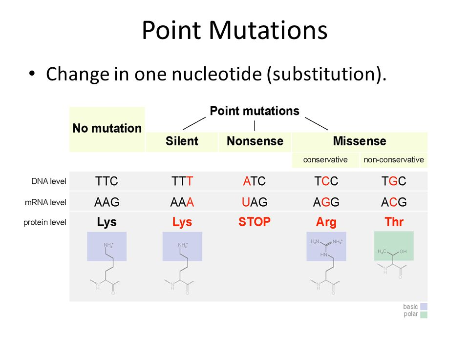 Point Mutations Change in one nucleotide (substitution).