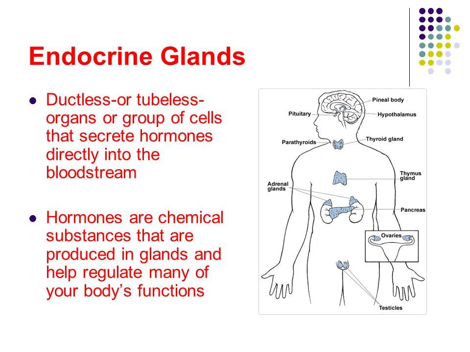 The Endocrine System C...