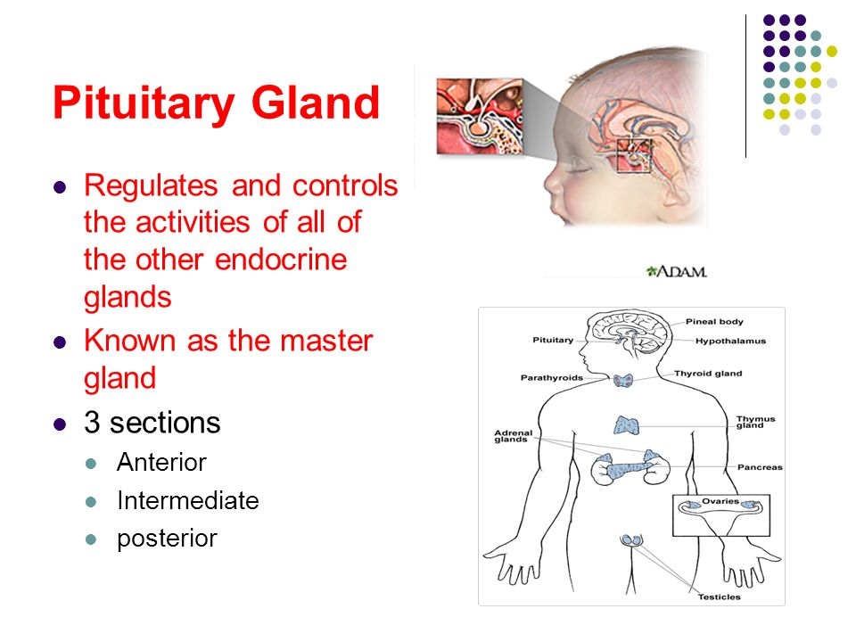 how to stop overactive adrenal glands