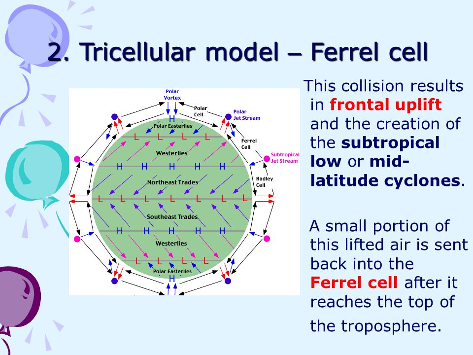 the tri cell model on Which cell model you are you will turn your copy of the rubric when you turn in your 3-d model name: the cell project is the first project assigned outside.
