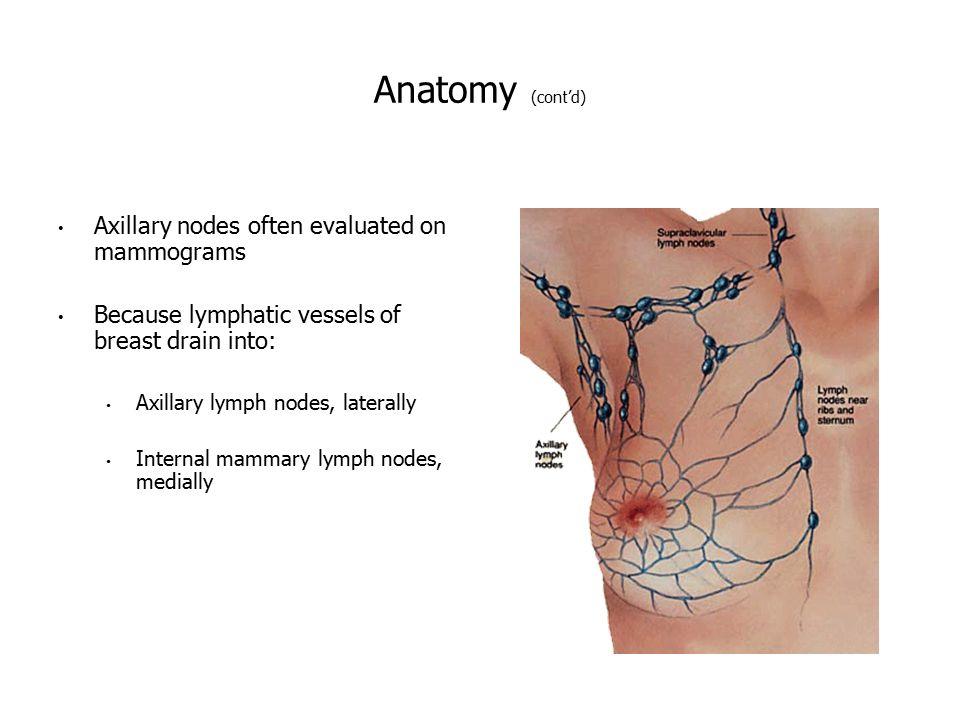 Attractive Internal Mammary Lymph Nodes Anatomy Pattern - Human ...