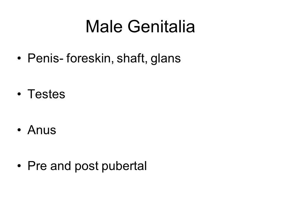 Male Genitalia Penis- foreskin, shaft, glans Testes Anus