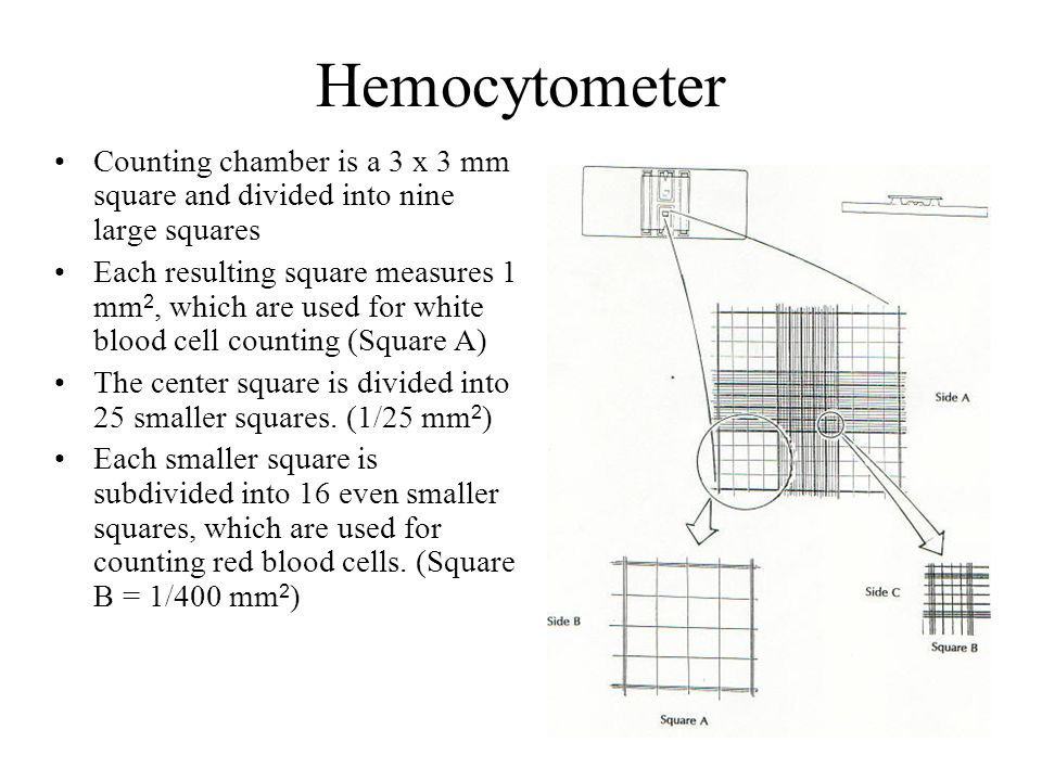 1. MIKROSCOPE And 2.HEMOCYTOMETER - ppt video online download