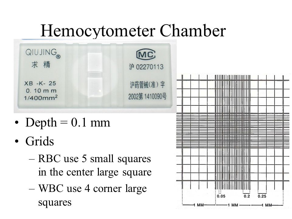 sperm count hemacytometer