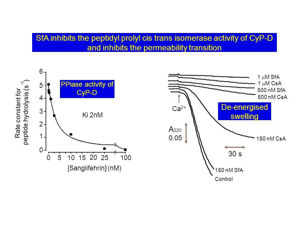 SfA inhibits the peptidyl prolyl cis trans isomerase activity of CyP-D and inhibits the permeability transition