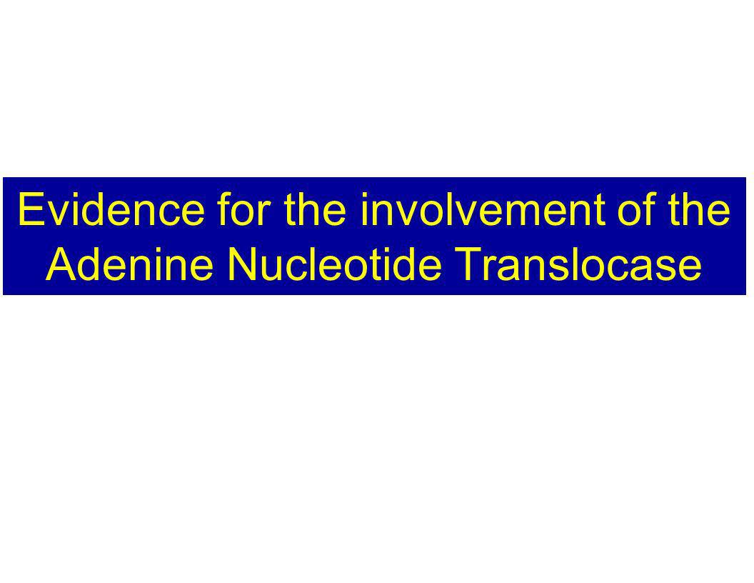 Evidence for the involvement of the Adenine Nucleotide Translocase