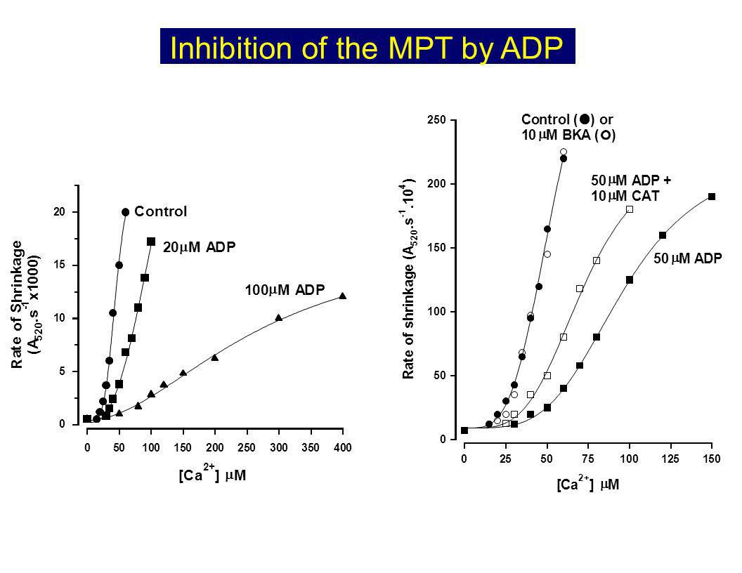 Inhibition of the MPT by ADP