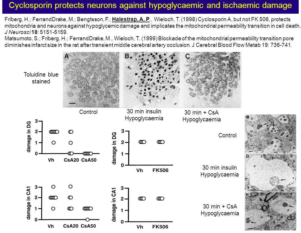 Cyclosporin protects neurons against hypoglycaemic and ischaemic damage