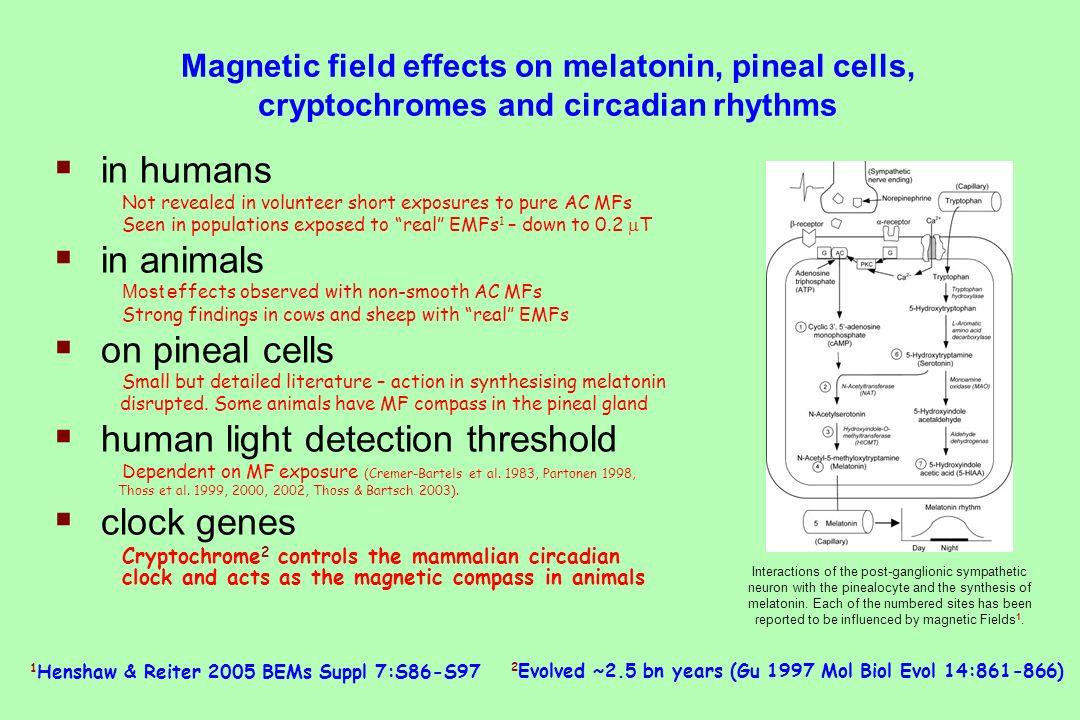 human light detection threshold clock genes