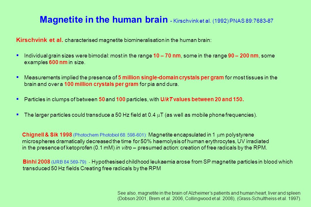 Magnetite in the human brain - Kirschvink et al. (1992) PNAS 89: