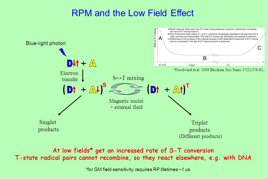 At low fields* get an increased rate of S-T conversion
