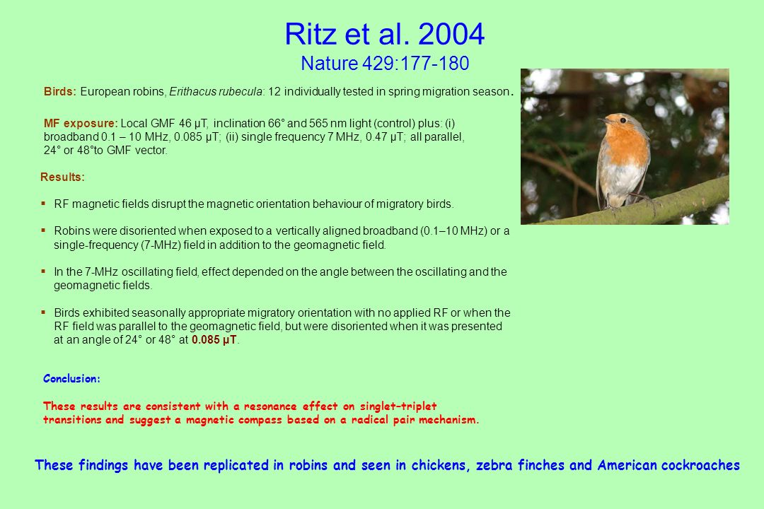 Ritz et al Nature 429: Birds: European robins, Erithacus rubecula: 12 individually tested in spring migration season.