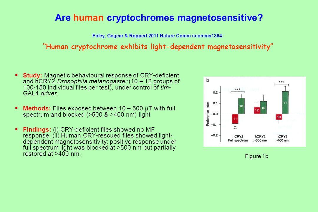 Are human cryptochromes magnetosensitive