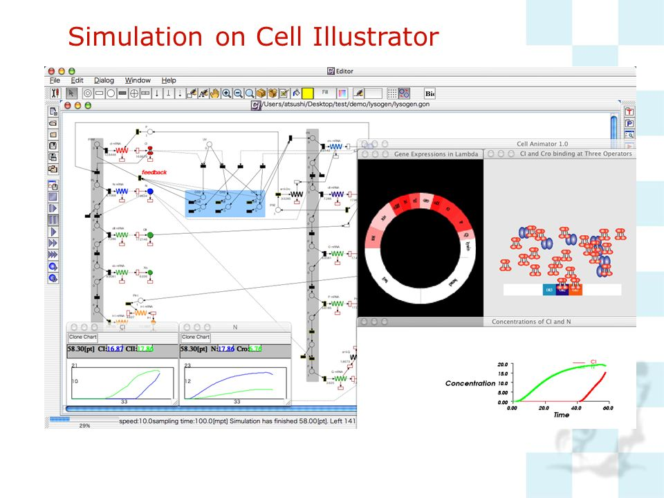 Simulation on Cell Illustrator