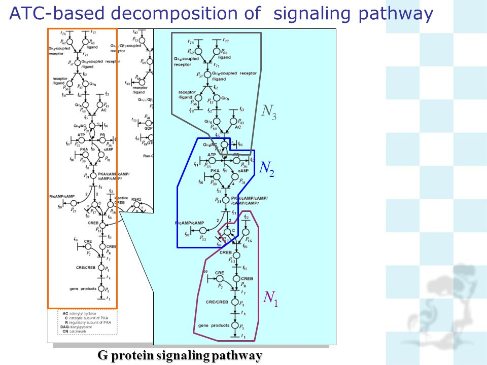 ATC-based decomposition of signaling pathway