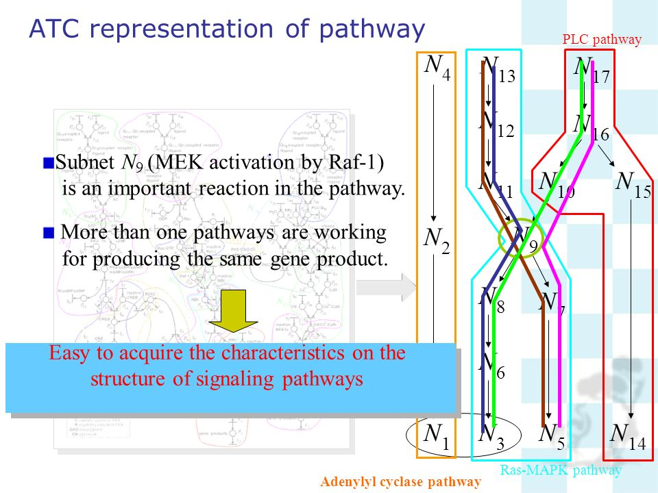 ATC representation of pathway