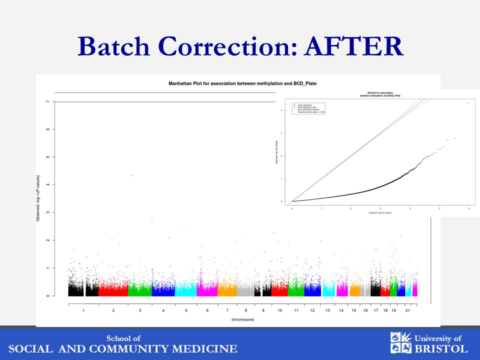 Batch Correction: AFTER