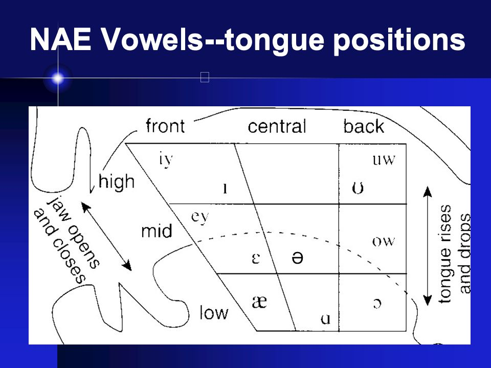what is the difference between pure vowels and diphthongs how do you describe them Daniel jones developed the cardinal vowel system to describe vowels in terms of the features of tongue height (vertical dimension),  monophthongs are sometimes called pure or stable vowels a vowel sound that glides from one quality to another is called a diphthong, and a vowel sound that glides successively through three qualities is a.