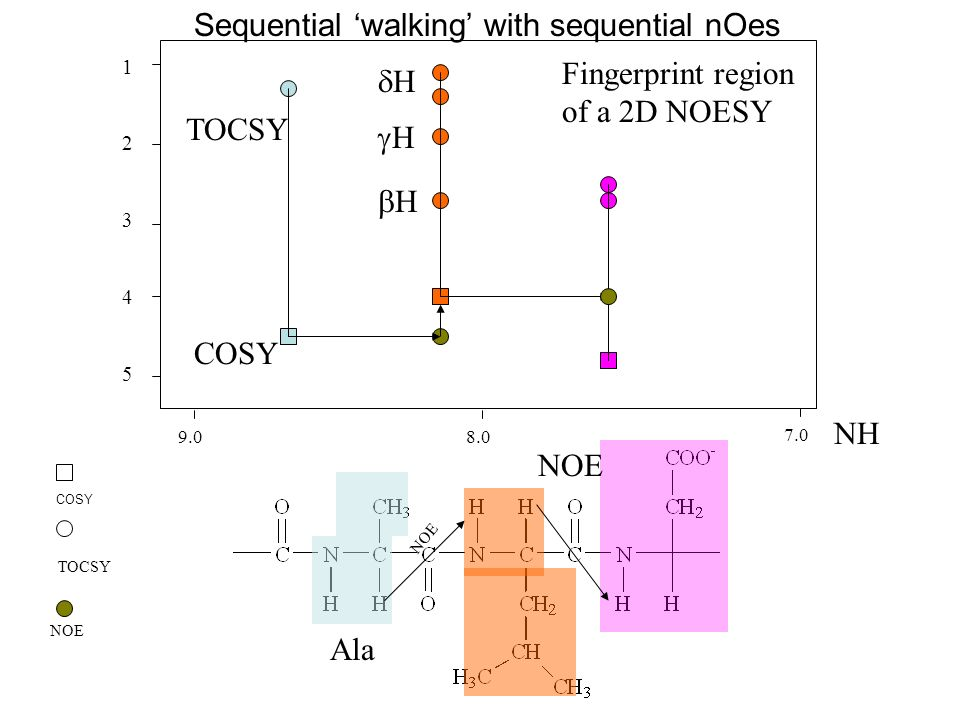 Sequential 'walking' with sequential nOes