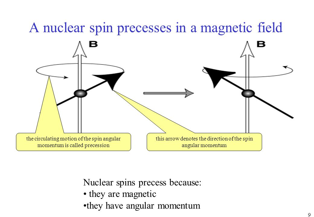 A nuclear spin precesses in a magnetic field