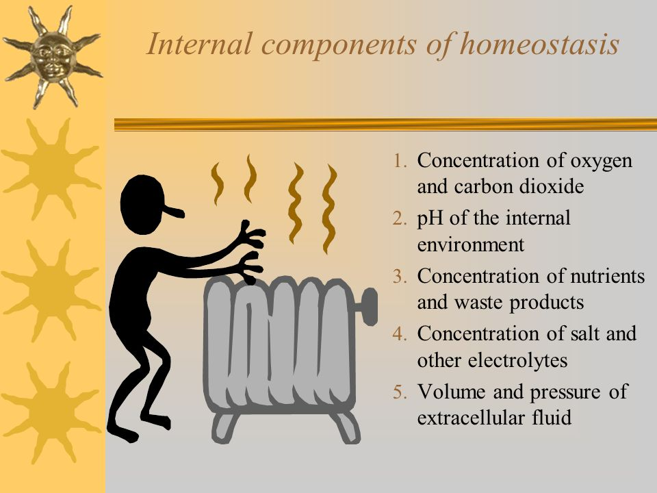 Internal components of homeostasis