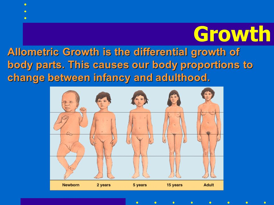 Growth Allometric Growth is the differential growth of body parts.