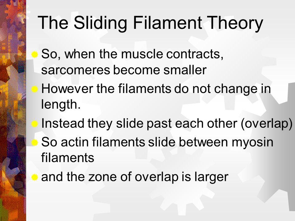 The Sliding Filament Theory