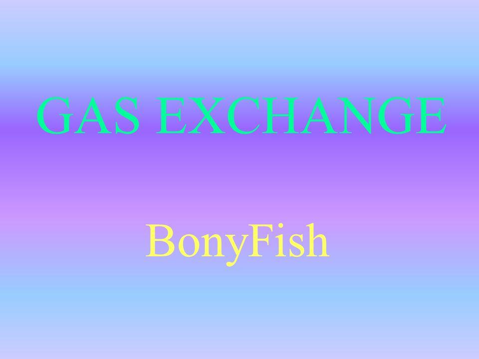 GAS EXCHANGE BonyFish