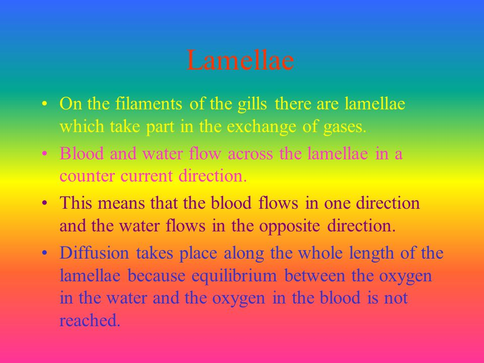 Lamellae On the filaments of the gills there are lamellae which take part in the exchange of gases.