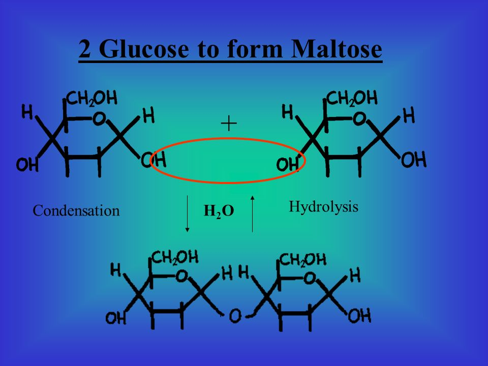 2 Glucose to form Maltose