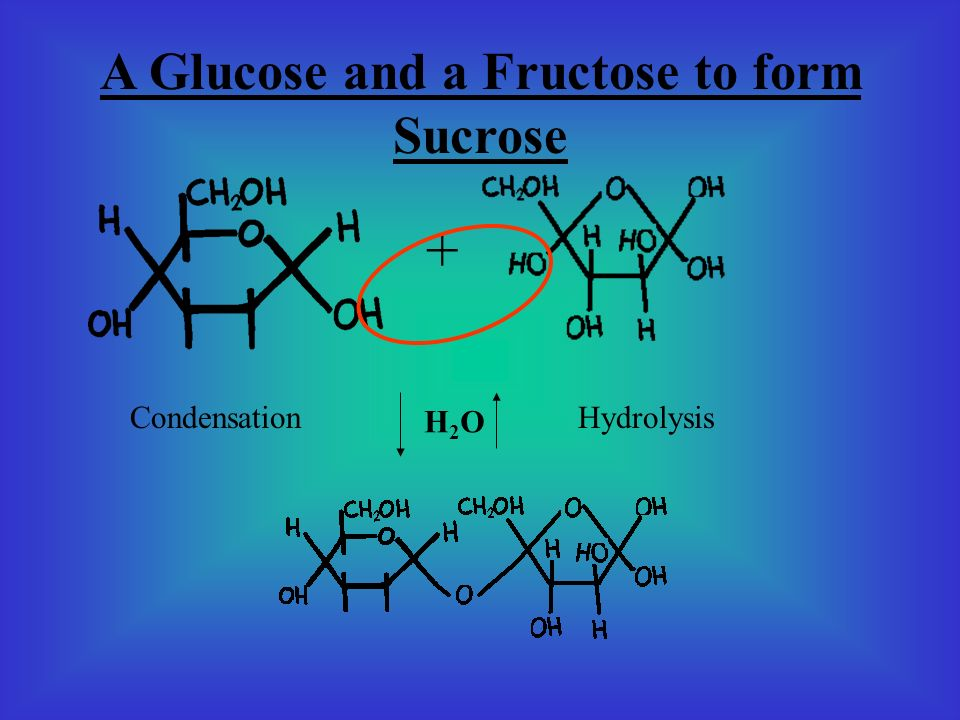 A Glucose and a Fructose to form Sucrose