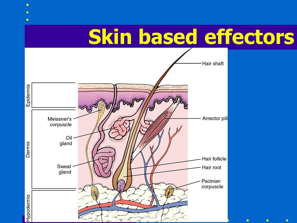 Skin based effectors