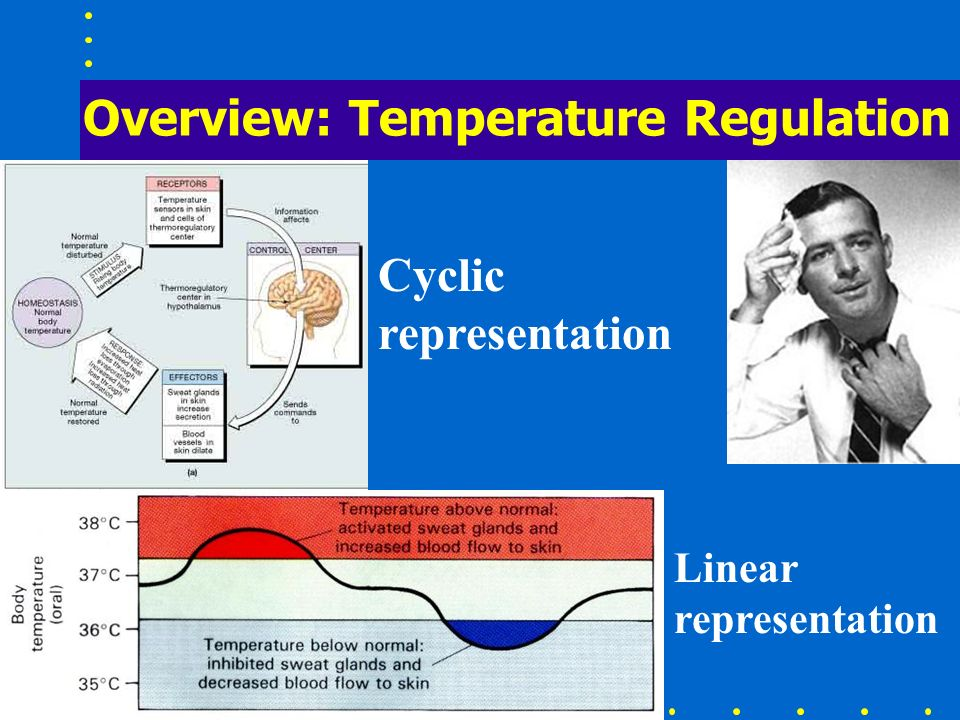 Overview: Temperature Regulation