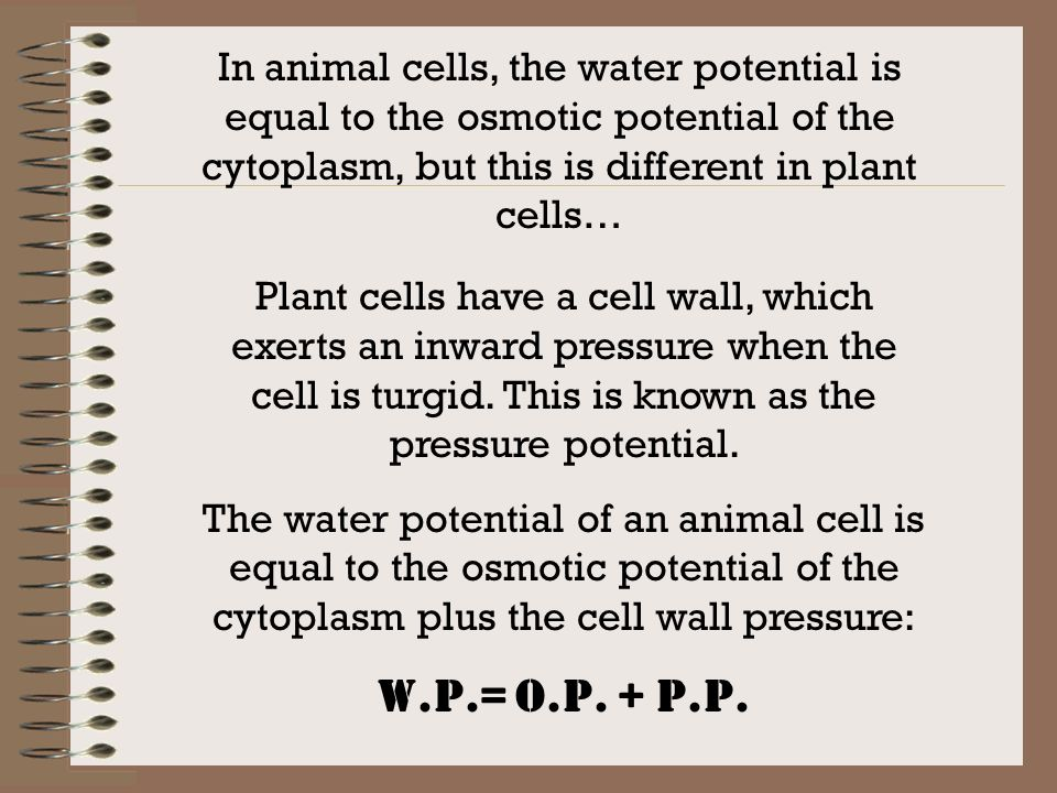 In animal cells, the water potential is equal to the osmotic potential of the cytoplasm, but this is different in plant cells…