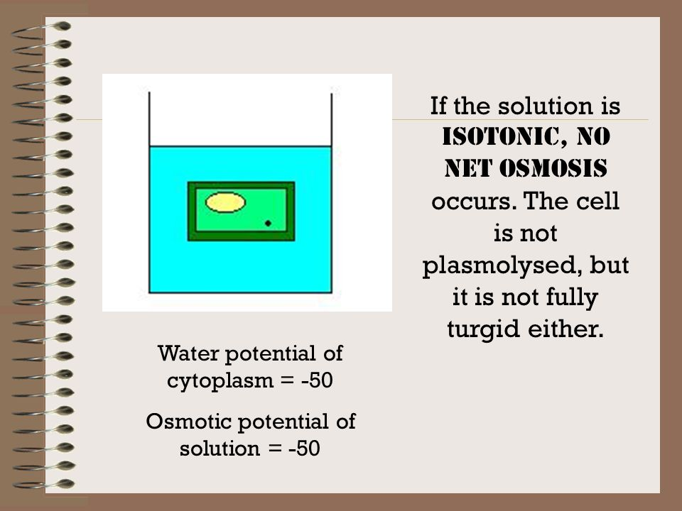 If the solution is isotonic, no net osmosis occurs