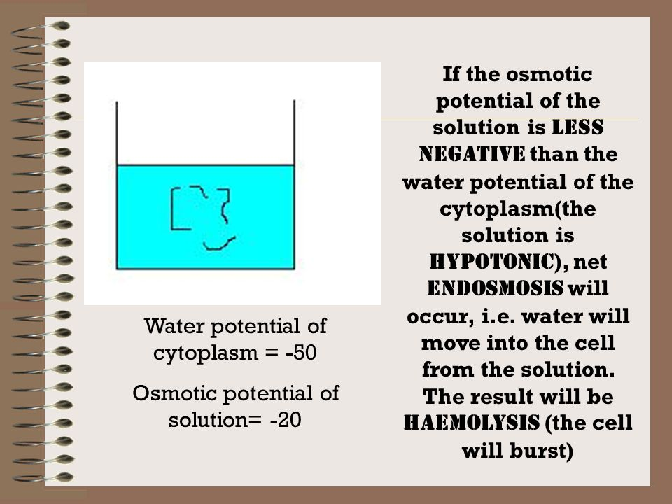 Water potential of cytoplasm = -50 Osmotic potential of solution= -20