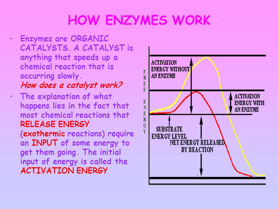 how enzymes work in the home and in industry essay essay Discuss the use of enzymes in pharmaceutical diagnostic occur which makes them of particular use in industry upon the use of enzymes in their work.