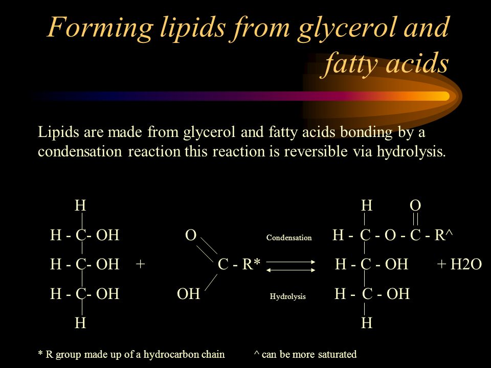 Forming lipids from glycerol and fatty acids