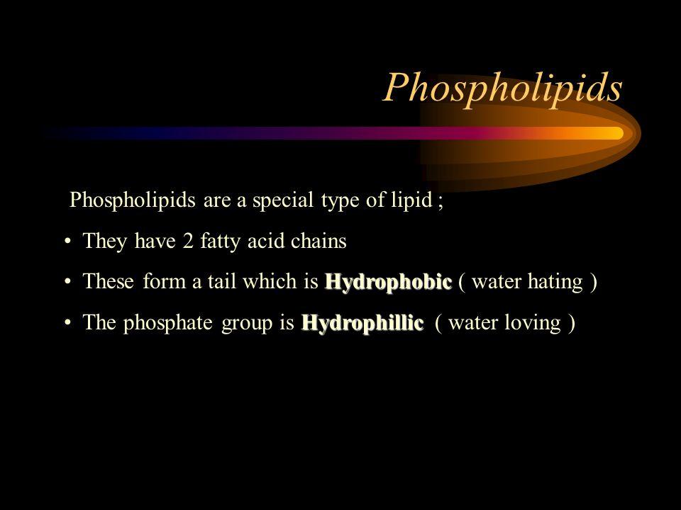 Phospholipids Phospholipids are a special type of lipid ;