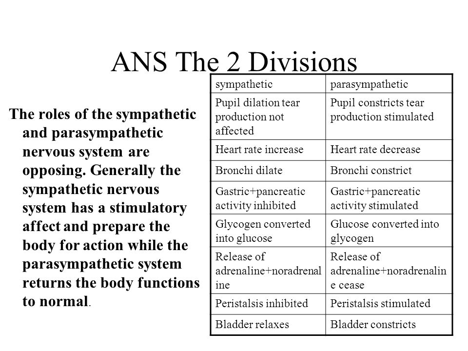 ANS The 2 Divisions sympathetic. parasympathetic. Pupil dilation tear production not affected. Pupil constricts tear production stimulated.