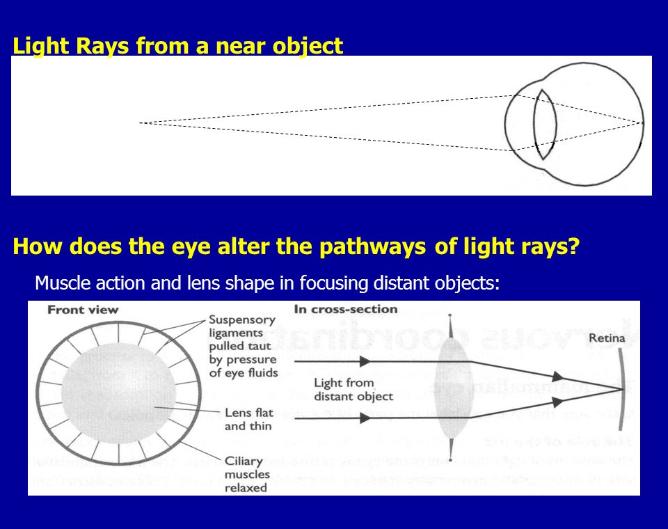 Light Rays from a near object
