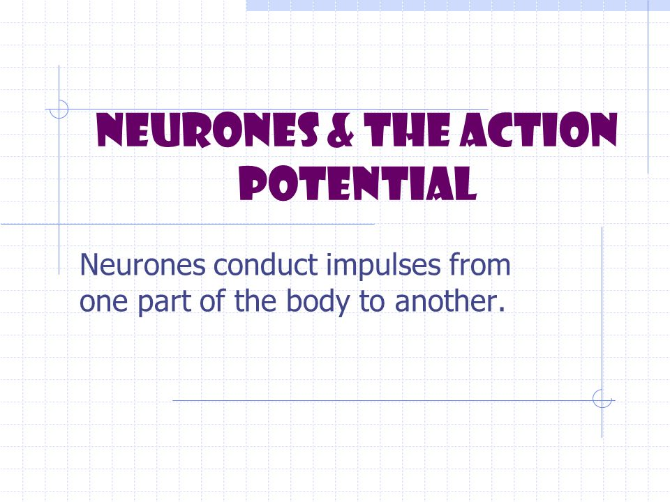 Neurones & the Action Potential