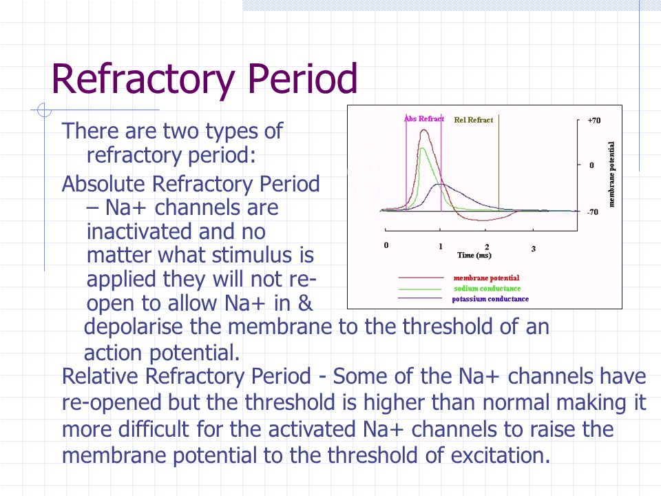 Refractory Period There are two types of refractory period: