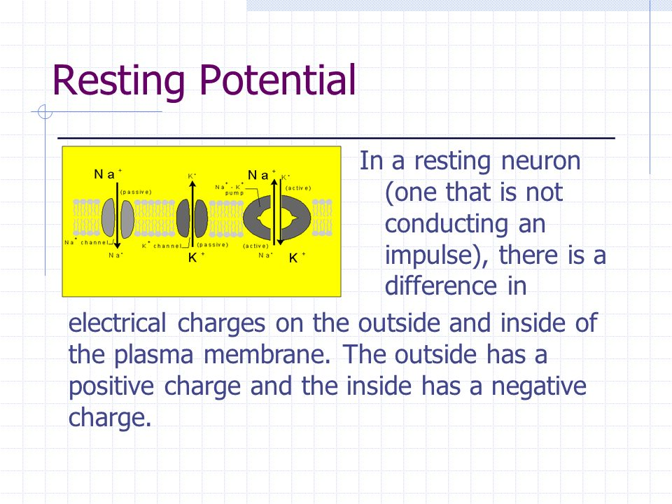 Resting Potential In a resting neuron (one that is not conducting an impulse), there is a difference in.