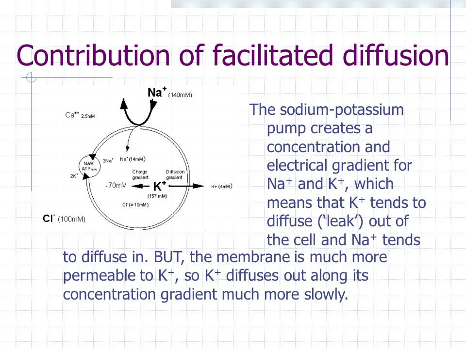 Contribution of facilitated diffusion