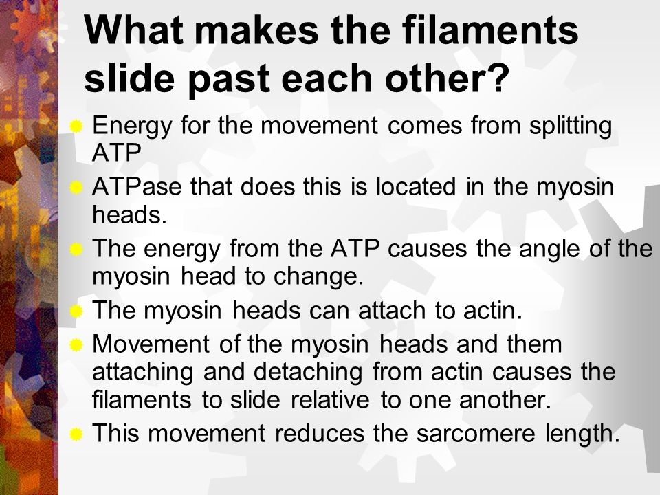 What makes the filaments slide past each other